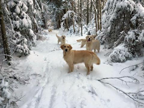 Snö är kul